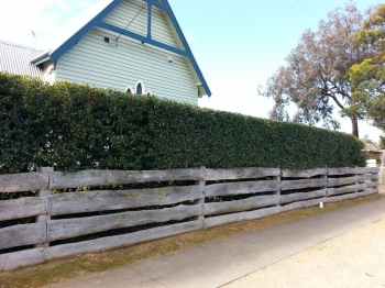 Front formal hedge